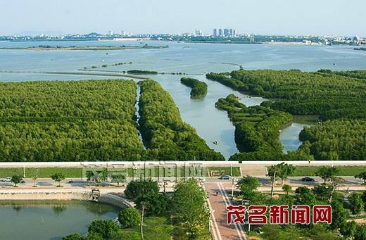 经过加固堤坝,种植红树林,清理渔排,我市水东湾更美丽了 茂名日报记者图片